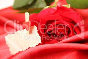 Red rose on satin background