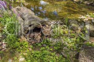 Raccoons habitat image.