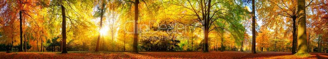 Extra breites Panorama von einem malerischen Wald im Herbst bei