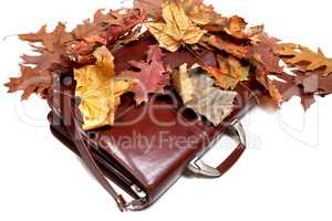 Brown leather briefcase and autumn dry leaves