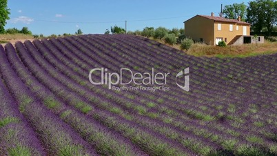French Countryside House Near Lavender Field In Provence Southern France