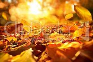 Stimmungsvolle Szene im Herbst mit fallenden Blättern und warme