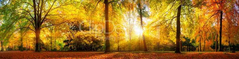 Panorama von einem herrlich schönen Wald im Herbst bei goldenem