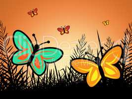 Butterfly In Summer Indicates Warmth Heat And Butterflies