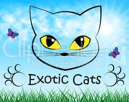 Exotic Cats Indicates Felines Unique And Unusual