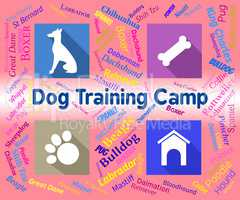 Dog Training Camp Indicates Group Trained And Coaching
