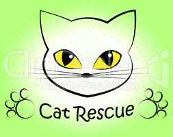 Cat Rescue Means Pet Kitty And Saving