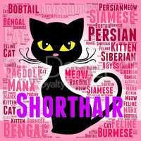 Shorthair Cat Represents Feline Puss And Purebred
