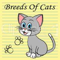 Breeds Of Cats Indicates Pets Puss And Pedigree