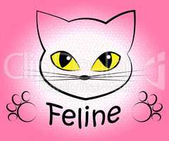 Feline Cat Means Pets Pet And Felines