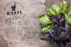 Circular stamp for spices - basil