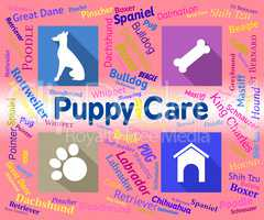 Puppy Care Shows Looking After And Canines