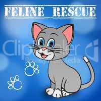 Feline Rescue Represents Domestic Cat And Cats