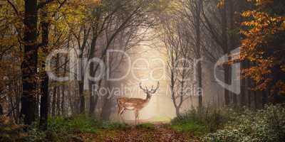 Damhirsch auf einem Weg im verträumt nebeligen Wald