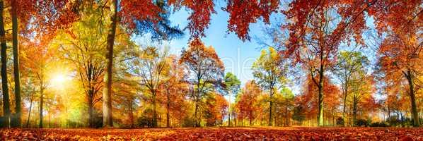 Panorama von bunten Bäumen bei strahlendem Sonnenschein im Herb