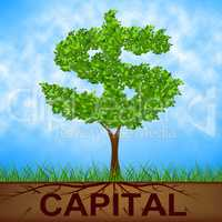 Capital Tree Indicates American Dollars And Banking