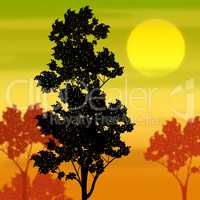 Countryside Sunset Shows Tree Trunk And Branch