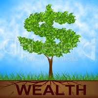 Wealth Tree Shows American Dollars And Branch