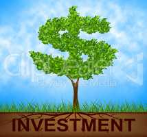 Investment Tree Indicates American Dollars And Branch