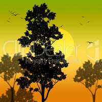 Countryside Sunset Represents Scene Meadows And Reforestation