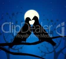Love Birds Means Boyfriend Affection And Fondness