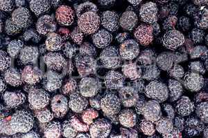 crop of black raspberry