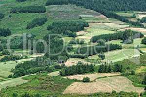 Spanien Galicien Landschaft Detail