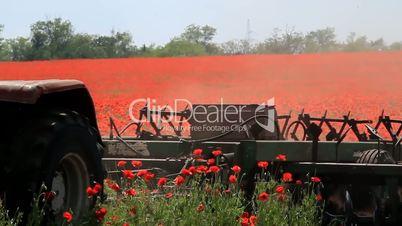 Tractor plowing poppy field