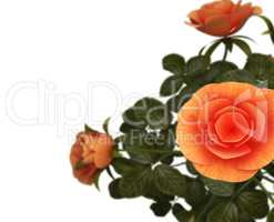 Copyspace Roses Represents Flora Romance And Bloom