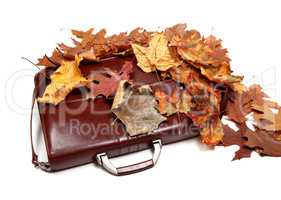 Brown leather briefcase and autumn multicolor dry leaves