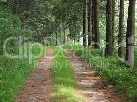 Waldweg im Erzgebirge
