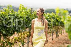 Smiling female vintner looking at grape crop