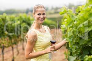 Portrait of female vintner holding wine glass and inspecting grape crop