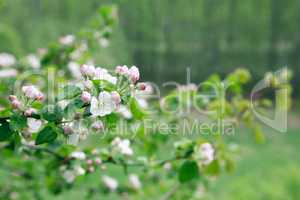 Twig With Flowers