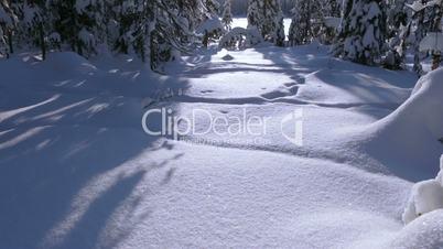 Sunny Winter Forest. Tilt Up