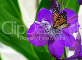 Beautiful flower with purple petals and butterfly.