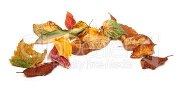Multicolor dried autumn leafs