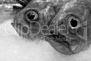Frische Fische auf einem Fischmarkt