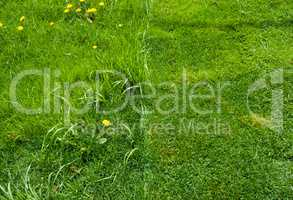 Detail of half of green grass mowed.