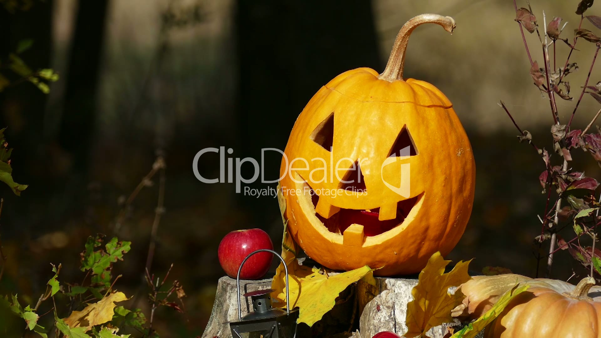 halloween pumpkin on a stump in the spring forest.: royalty-free