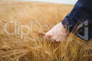 Close-up of farmer checking his crops