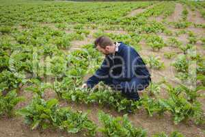 Farmer checking his crops in the field