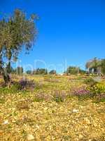 Gethsemane Garden On Mount Of Olives, Jerusalem
