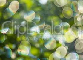 Nature green plants bokeh