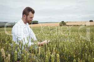 Agronomist checking the crops in the field