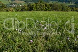 Grass field with flowers