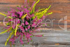 Erica lila Heidekraut im Herbst als Freisteller