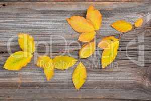 Herbst Bunte Buchenblätter Zweig Holzhintergrund