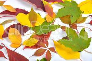 Herbst Bunte Buchenblätter Zweig