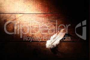 Feather On Wood